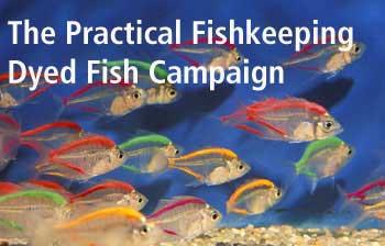 glass fish parambassis ranga aquarium tropical fish from tropical glass fish 350x224